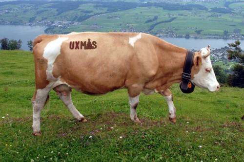 vaca-ux